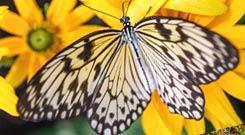 butterfly-sidebar2